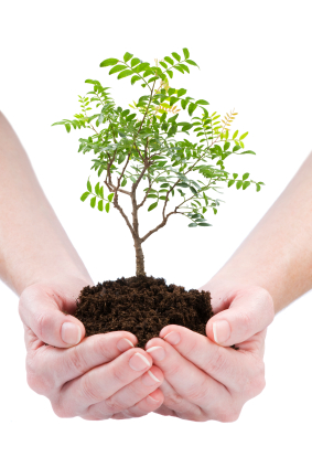 Your coaching business as a tree seedling, an unfinished work of art